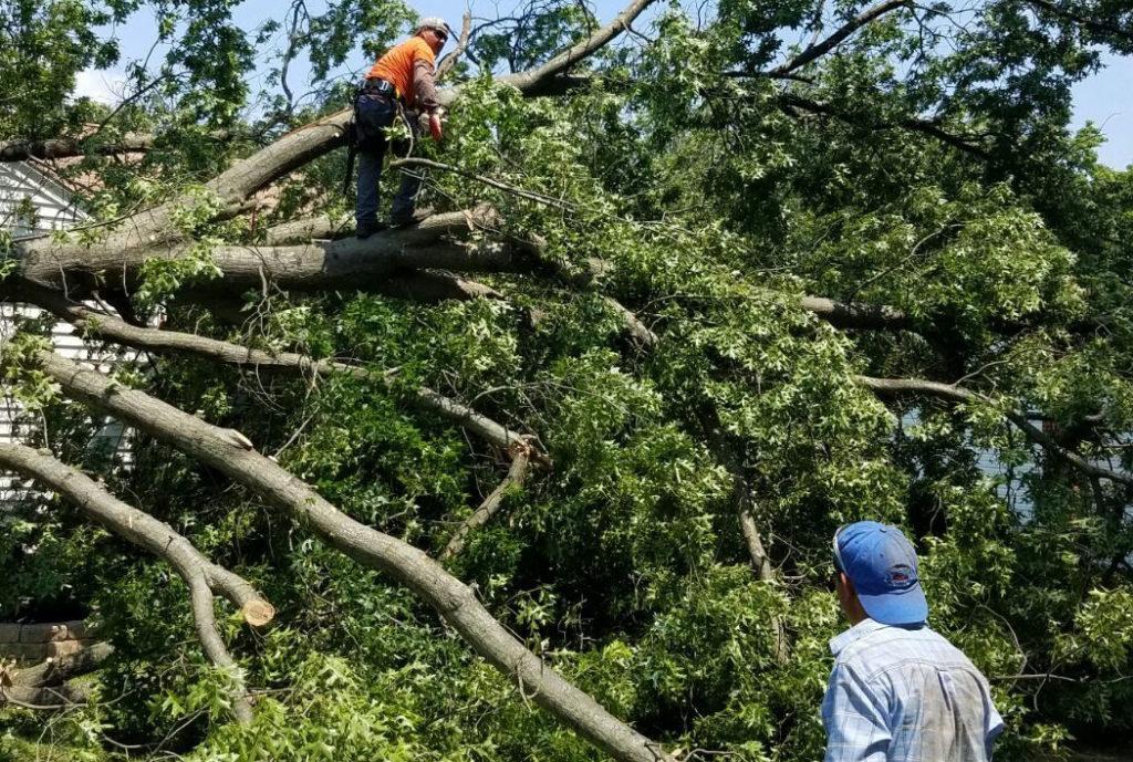 Tree Removal in Sarasota