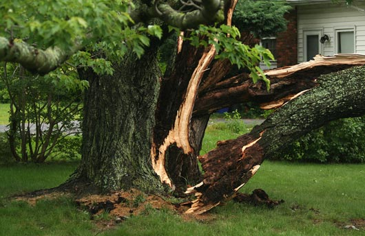 emergency tree service sarasota fl