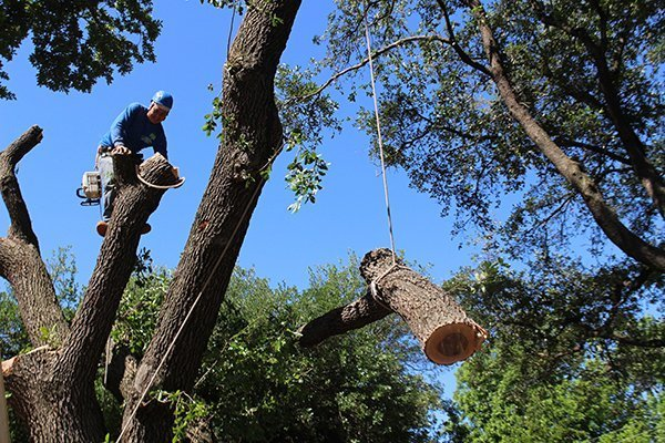 Tree removal Sarasota