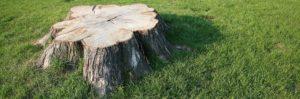 Tree service Sarasota