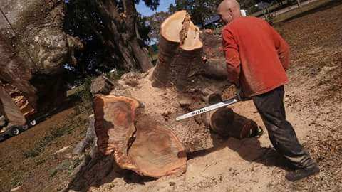 Sarasota Tree Company