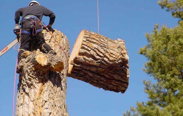 Tree service comapny sarasota florida